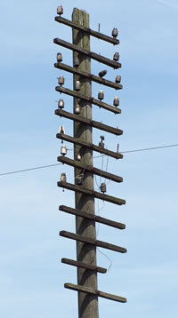 pole and insulators, Cardiff